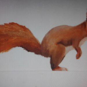Muurschildering eekhoorn